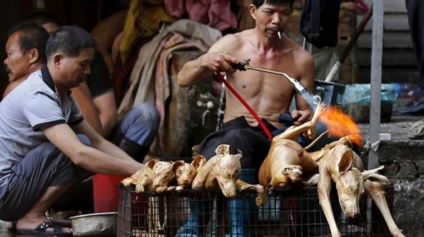 festival-daging-anjing-yulin-masih-terus-diadakan